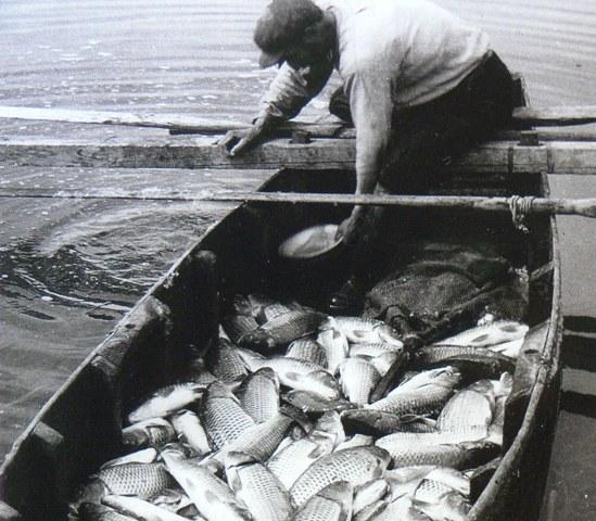 Αναζήτηση για τα ψάρια που χρονολογούνται